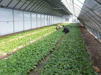 甘肃东乡:加大产业支持力度 促进搬迁群众增收