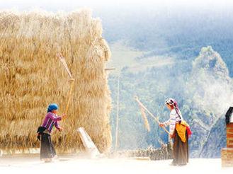 扎尕那村的农林牧循环复合系统