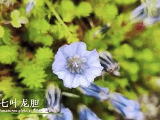 首届中国野生生物视频年赛提名作品公布