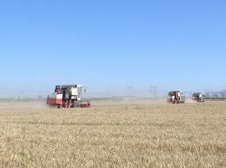 枣强县56万亩小麦颗粒归仓