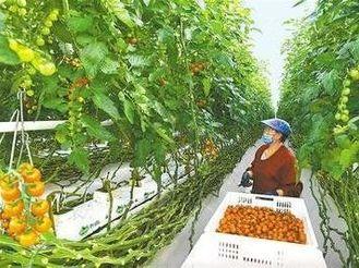 丝路农业交流与中华农业文明的发展